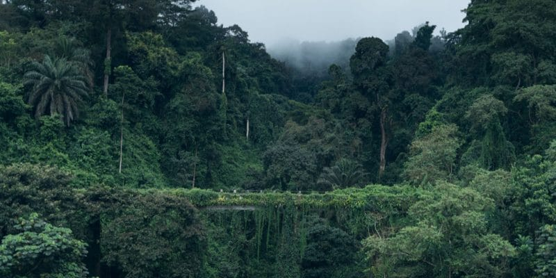 CENTRAL AFRICA: EU Grants €20 Million for Biodiversity Protection ©Jan Ziegler/Shutterstock