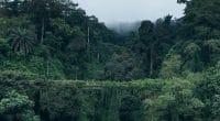 AFRIQUE CENTRALE : 20 M€ de subventions de l'UE pour la protection de biodiversité ©Jan Ziegler/Shutterstock