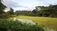 BÉNIN : un projet d'éducation environnementale à Grand-Popo pour sauver les mangroves©stephane lalevee/Shutterstock