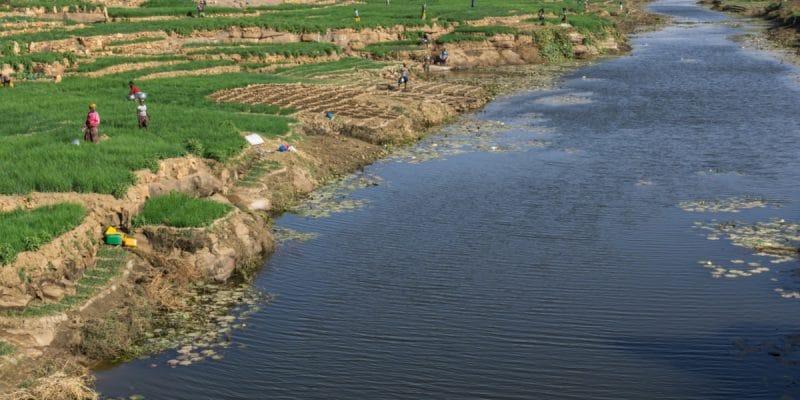 TOGO: Population resilience to coastal erosion involves agriculture©Torsten Pursche/Shutterstock