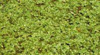 UGANDA: Egypt funds Kariba invasive grass control project© DESIGNFACTS/Shutterstock