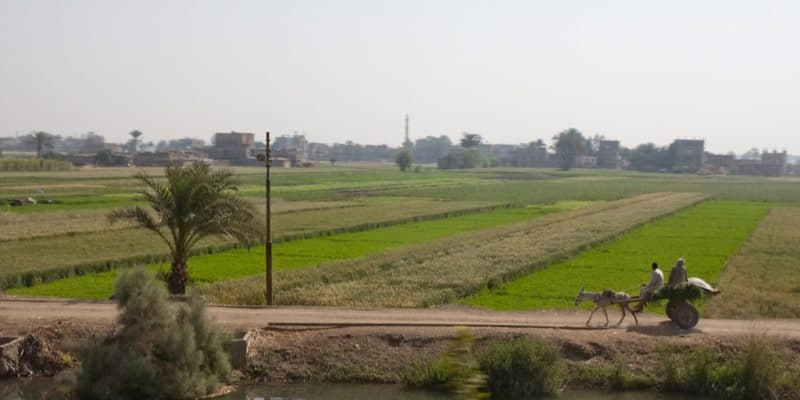 EGYPT: Schneider Electric Supplies Solar-Powered Water Pumping Systems ©Jen Watson/Shutterstock