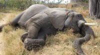 ANGOLA: Towards strengthening the anti-poaching law ©Nora Marie Shutterstock