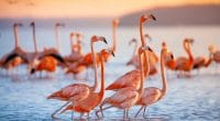 SOUTH AFRICA: Sanccob rescues 2,000 pink flamingo babies ©jdross75/Shutterstock