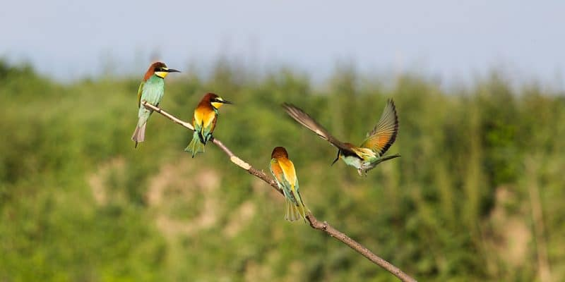 MAROC : lancement d'un projet pour renforcer les capacités en matière de biodiversité © De Tanja_G/Shutterstoock