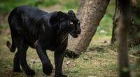 TCHAD : un fonds d'indemnisation des conflits homme-faune est annoncé©FrenchwildlifephotograherShutterstock