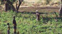 TANZANIA: Solar energy to facilitate irrigation in Meru© Gilles Paire/Shutterstock