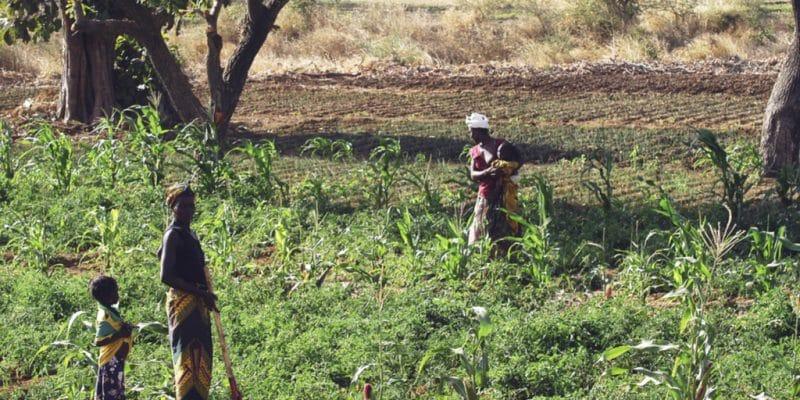 TANZANIE : de l'énergie solaire pour faciliter l'irrigation à Meru© Gilles Paire/Shutterstock