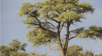 TUNISIE : avec les populations, Dream in Tunisia plante des acacias contre le désert© WOLF AVNI/Shutterstock