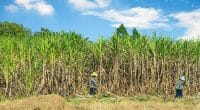TANZANIA: Sugar-cane plantation to be transformed into reserve, soon©TigerStock's/Shutterstock