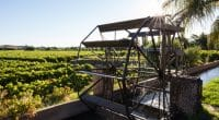 KENYA : blocage du projet d'irrigation Nzoia de Sinohydro, par les riverains déplacés©JMx Images/Shutterstock