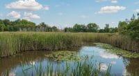 KENYA: Government wants to strengthen wetlands protection©PhilipYb StudioShutterstock