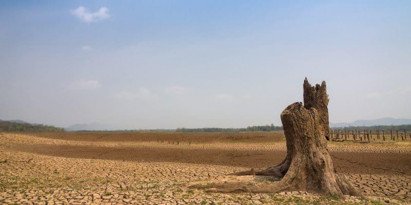 SAHEL : les États adoptent un Plan d'investissement climatique d'environ 400 Mds $©24NovembersShutterstock