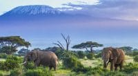 AFRICA: Intel relies on artificial intelligence to save elephants© HordynskiPhotography/Shutterstock