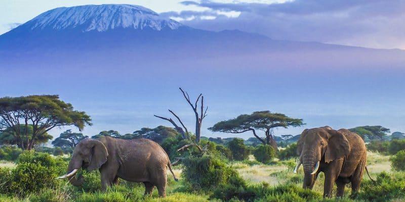 AFRIQUE : Intel mise sur l'intelligence artificielle pour sauver les éléphants© HordynskiPhotography/Shutterstock