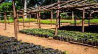 ÉTHIOPIE : Eden cherche de nouveaux partenaires pour continuer le reboisement du pays©Dennis WegewijsShutterstock