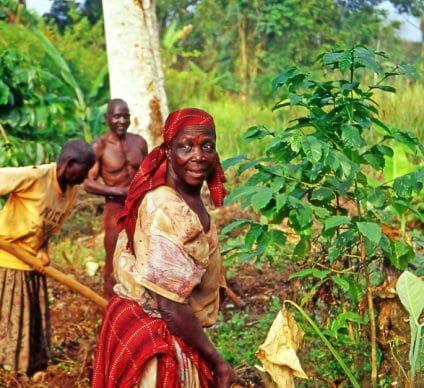 SENEGAL: BNP Paribas grants $1.8 million for eco-friendly agriculture programme©PecoldShutterstock