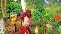 SÉNÉGAL : BNP Paribas octroie 1,8 M$ à un programme d'agriculture écologique©PecoldShutterstock