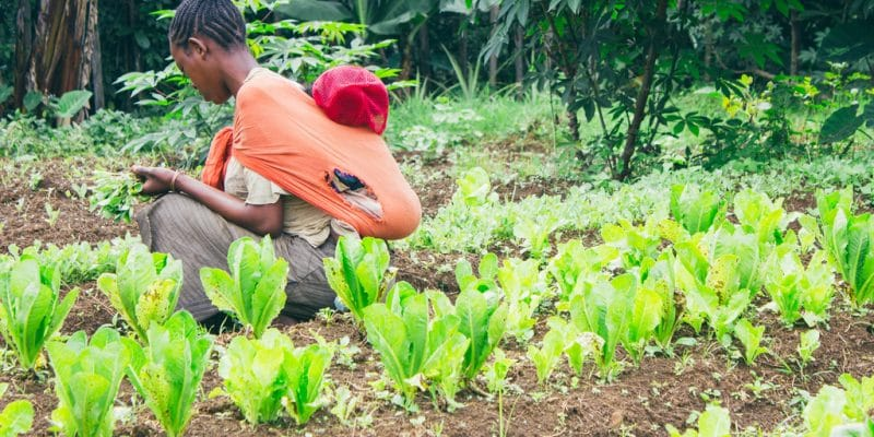 AFRICA: ECOWAS mobilizes $80 million for climate-friendly smart agriculture©AGLPhotography/Shutterstock