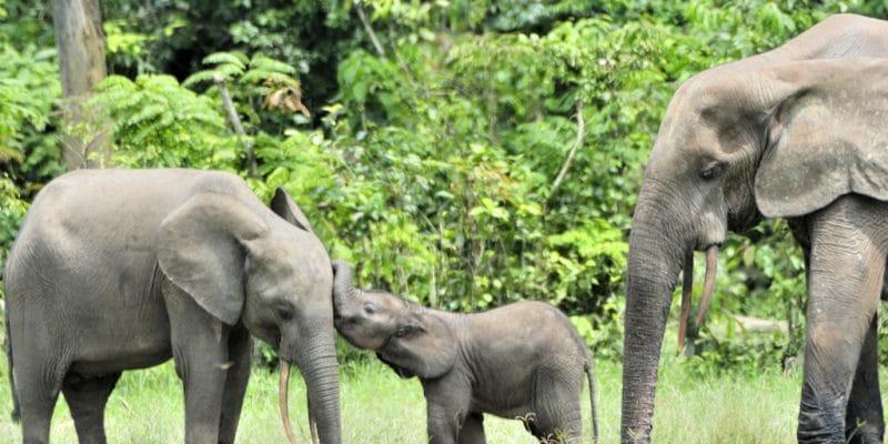 AFRIQUE CENTRALE : 100 M€ de l'Union européenne pour la protection de la biodiversité©Sergey Uryadnikov/Shutterstock