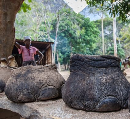 CENTRAL AFRICA: The two Congos will fight poaching together ©Katiekk/Shutterstock