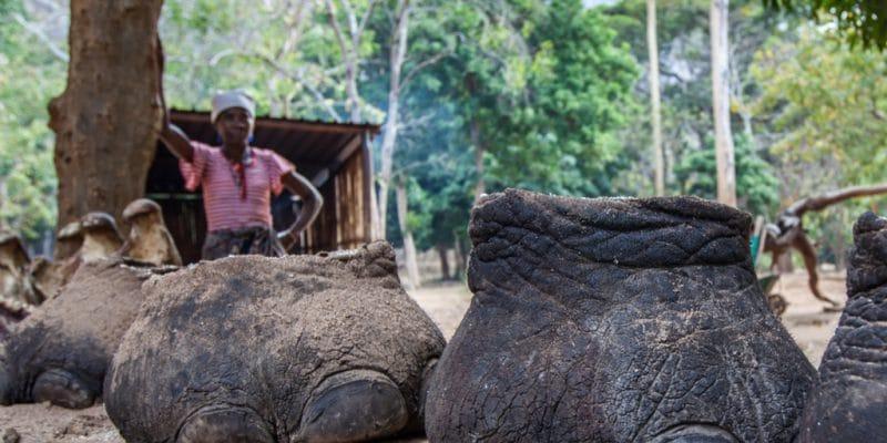 AFRIQUE CENTRALE : les deux Congo vont combattre ensemble le braconnage ©Katiekk/Shutterstock