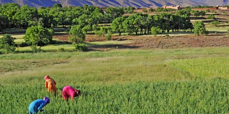 AFRIQUE : la Banque mondiale engage 22,5 Md$ pour des projets climatiques sur 5 ans ©Jen Watson/Shutterstock