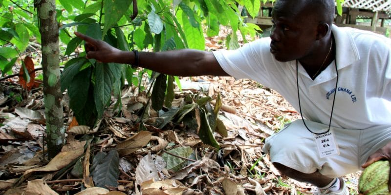 IVORY COAST: Training on climate change and sustainable agriculture©Jen Watson/Shutterstock