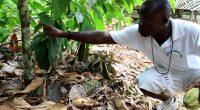 COTE D'IVOIRE : une formation au changement climatique et à l'agriculture durable©©Jen Watson/Shutterstock