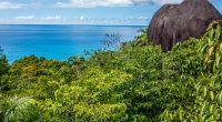 SEYCHELLES : l'État et la FAO allouent 5 M$ à la gestion des forêts et à la bioénergie©KarlosXII/Shutterstock