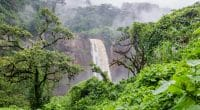 WEST AFRICA: ECOWAS strengthens forest protection with SIDA and FAO©Fabian Plock/Shutterstock