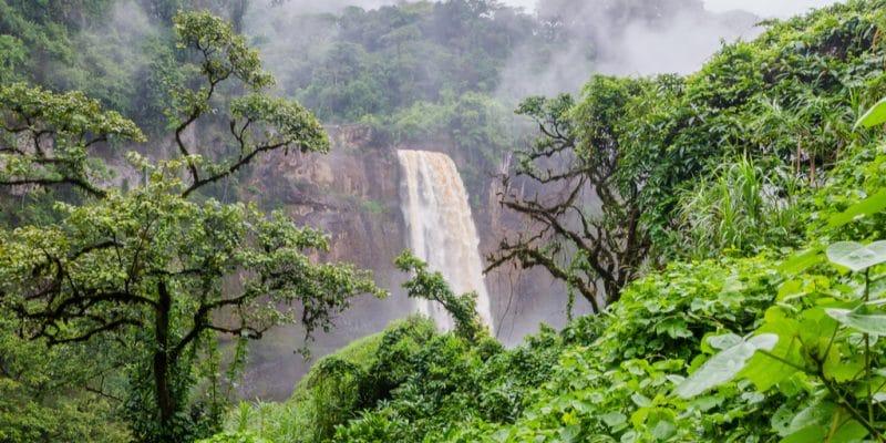 AFRIQUE DE L'OUEST : la Cedeao durcit la protection des forêts avec l'Asdi et la FAO©Fabian Plock/Shutterstock
