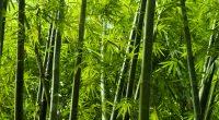 RWANDA : le gouvernement s'allie à China Bamboo pour la valorisation du bambou©szefei/Shutterstock