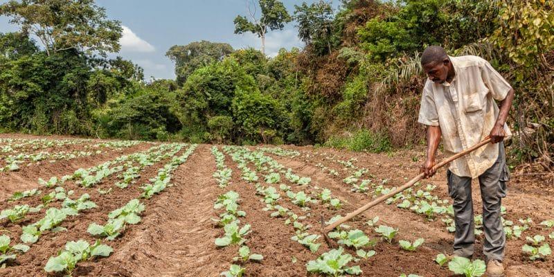 AFRIQUE : la BAD et les élus locaux pensent la résilience aux changements climatiques©Andre Silva Pinto/Shutterstock