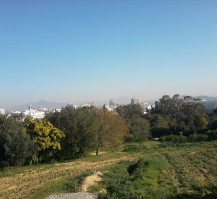 TUNISIA: CRDA inaugurates urban forest in central Tunis©Tilki Mohamad Ali/Shutterstock