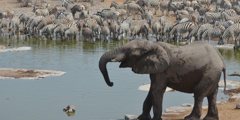 TCHAD : l'association Noé obtient la gestion déléguée de la réserve de Binder-Léré© PETER HATCH/Shutterstock
