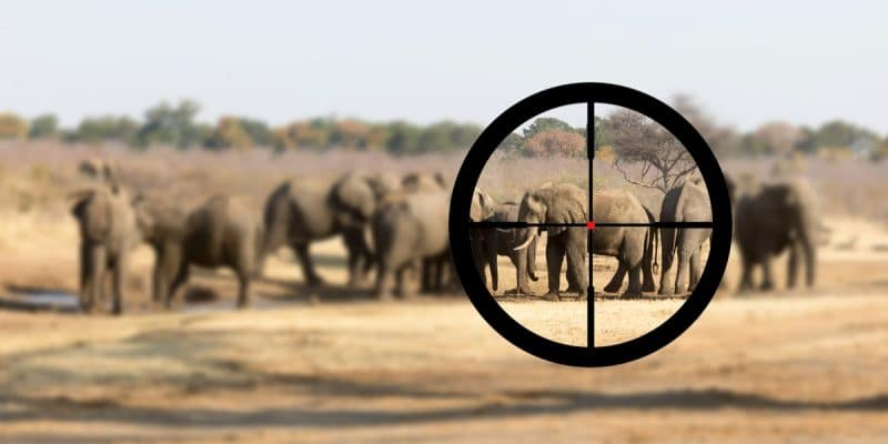 BOTSWANA: Environmentalists oppose resumption of elephant hunting©MyImages - MichaShutterstock