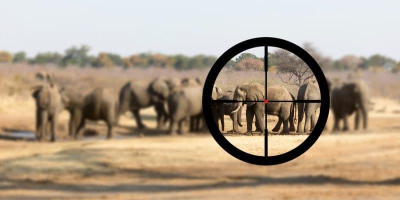 BOTSWANA: Environmentalists oppose resumption of elephant hunting©MyImages - MichaShutterstock