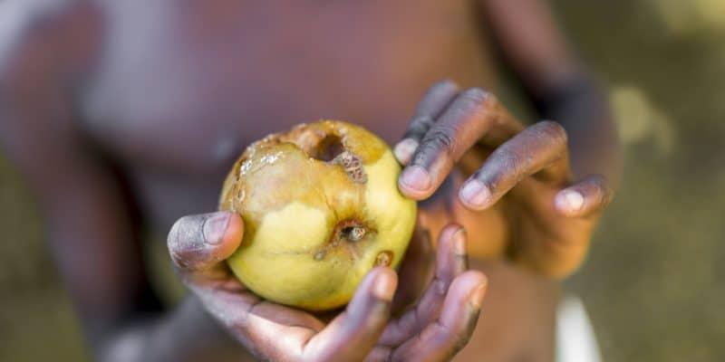 KENYA: Young engineer develops solar refrigerator for improved food preservation©Shutterstock