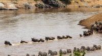 TANZANIE : Dodoma demande au Kenya de renoncer aux barrages sur la rivière Mara©Arend van der Walt/Shutterstock