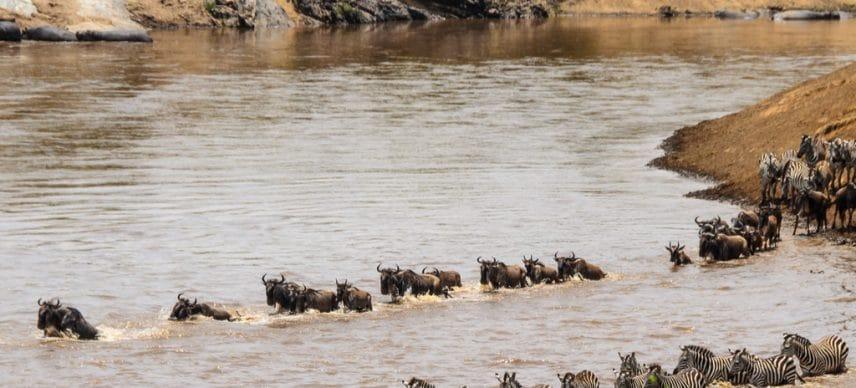 TANZANIA: Dodoma calls on Kenya to stop damming projects on Mara River ©Arend van der Walt/Shutterstock
