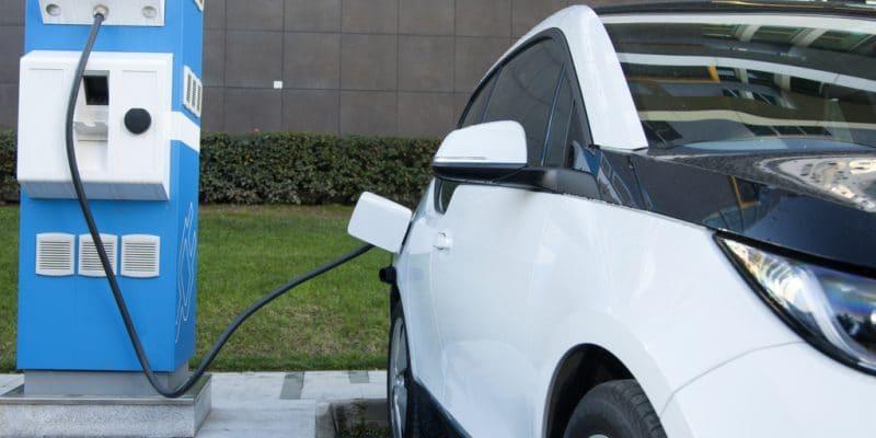 ÉGYPTE : Dongfeng Motor va installer une usine de fabrication de voitures électriques©otomobil/Shutterstock