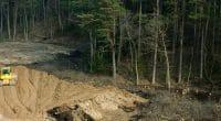 BURKINA FASO : l'opposition au déclassement de la forêt de Kua se généralise©shervydShutterstock