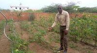 SENEGAL: Abdoul Rahim Ba showcases bio agriculture's potential for Africa