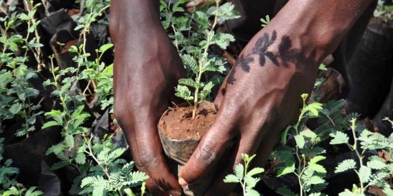 TOGO: Media workers join forces to plant trees©journée de l'arbre Togo