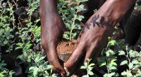 TOGO : les hommes de média se mobilisent pour planter des arbres©journée de l'arbre Togo