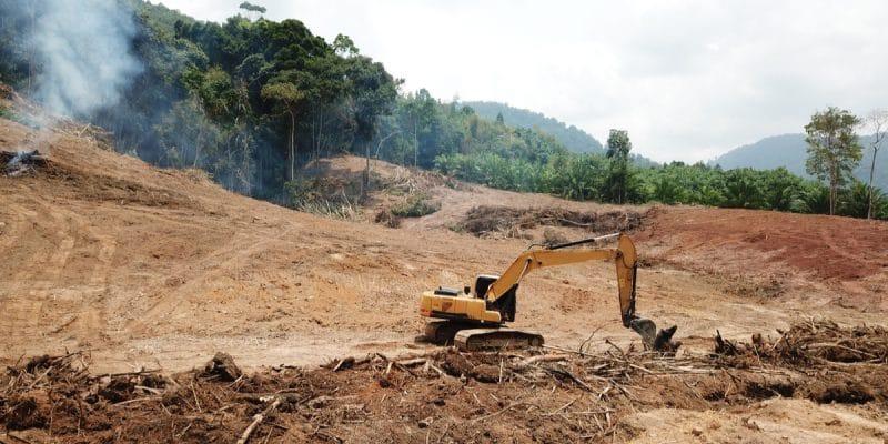 LIBERIA : un programme pour la production durable de l'huile de palme©Rich CareyShutterstock