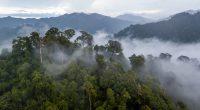 BÉNIN : la Banque Mondiale octroie 75 M$ pour la préservation des forêts classées©Richard WhitcombeShutterstock