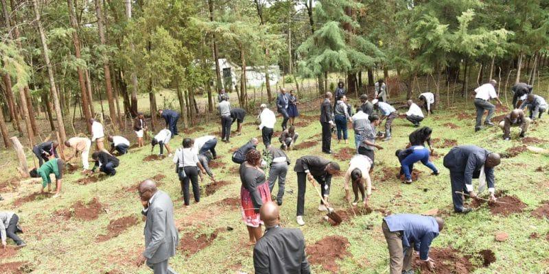 KENYA : des initiatives pour agrandir le couvert forestier et restaurer les terres©Cheboite Titus/Shutterstock