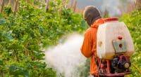 MALI : reconduction d'une liste de 59 pesticides sans danger pour l'environnement©ittiponShutterstock
